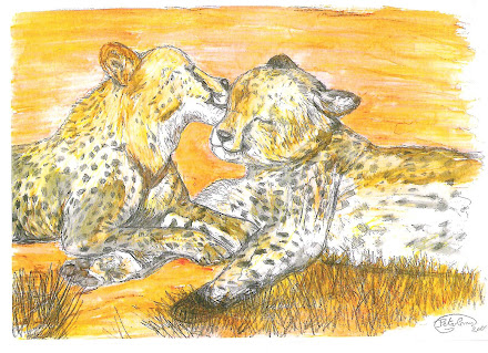 Cheetahs in love pic