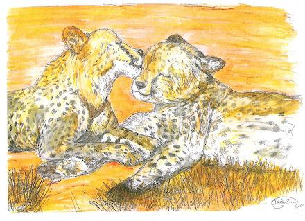 Cheetahs in love pic