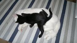 Stor och liten, svart och vit...