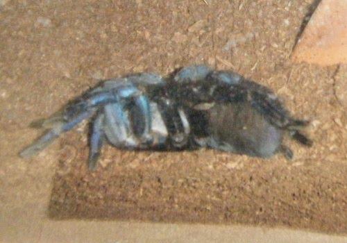 Arachnid Menagerie: Tears - Peek a Boo!