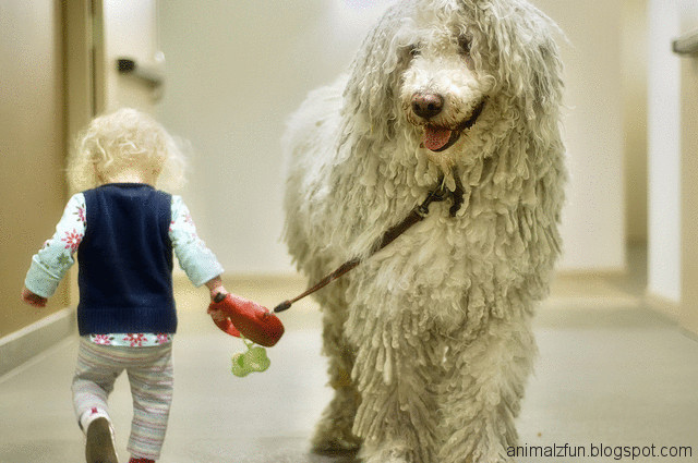 Komondor Dog | Funny And Cute Animals Komondor Dog Pictures