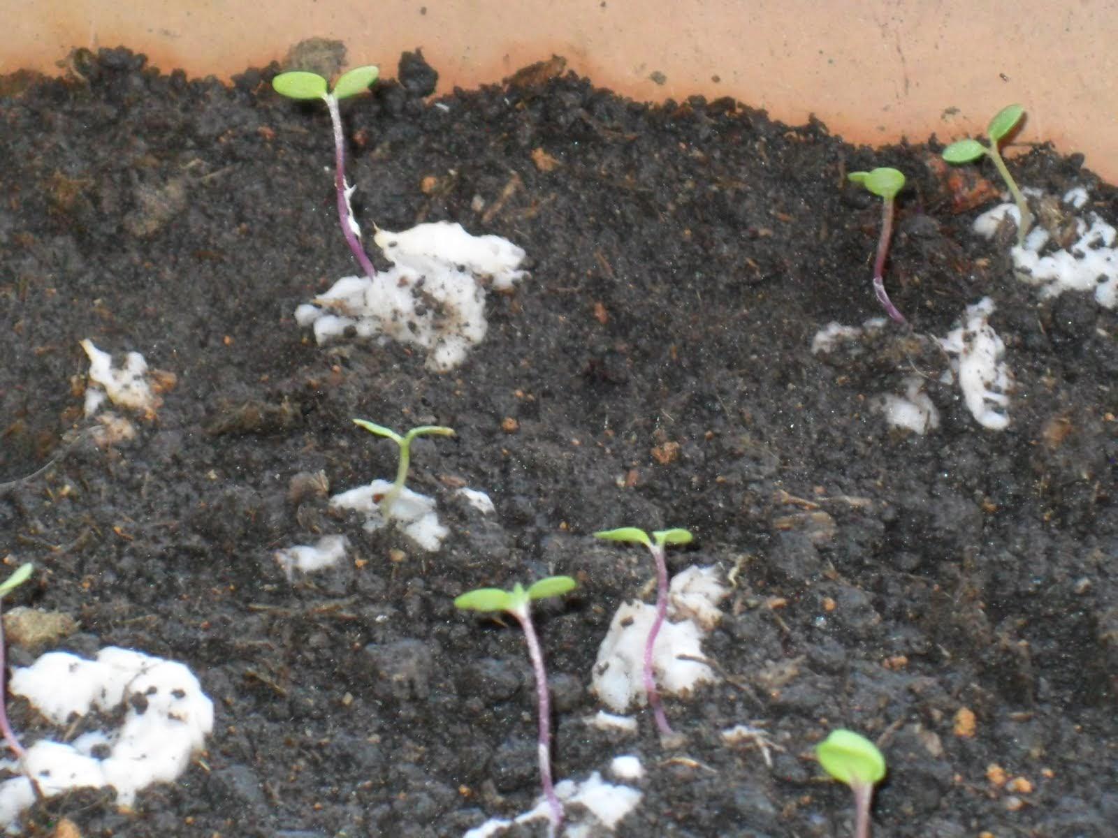 Passo a Passo para uma germinação eficiente