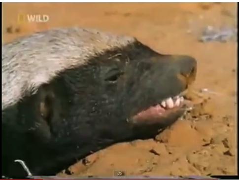 who is honey badger randall. who is honey badger randall.