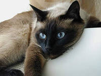Видеть во сне больную кошку фото