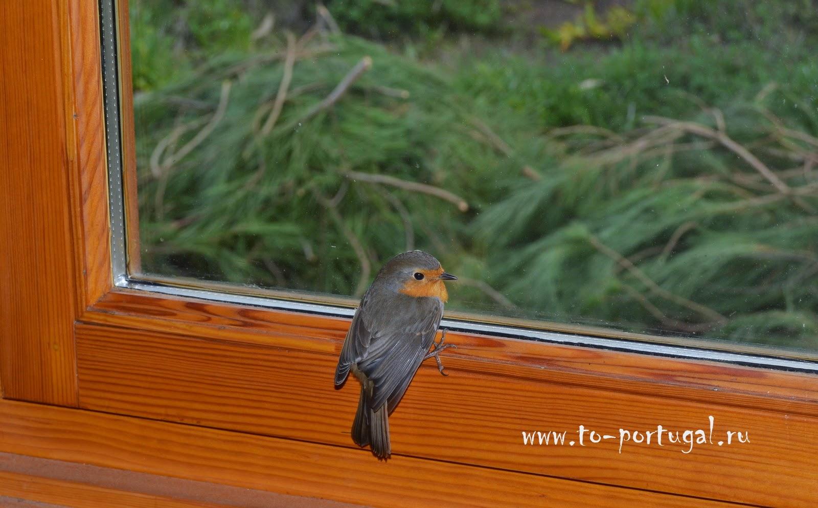 птицы в португалии