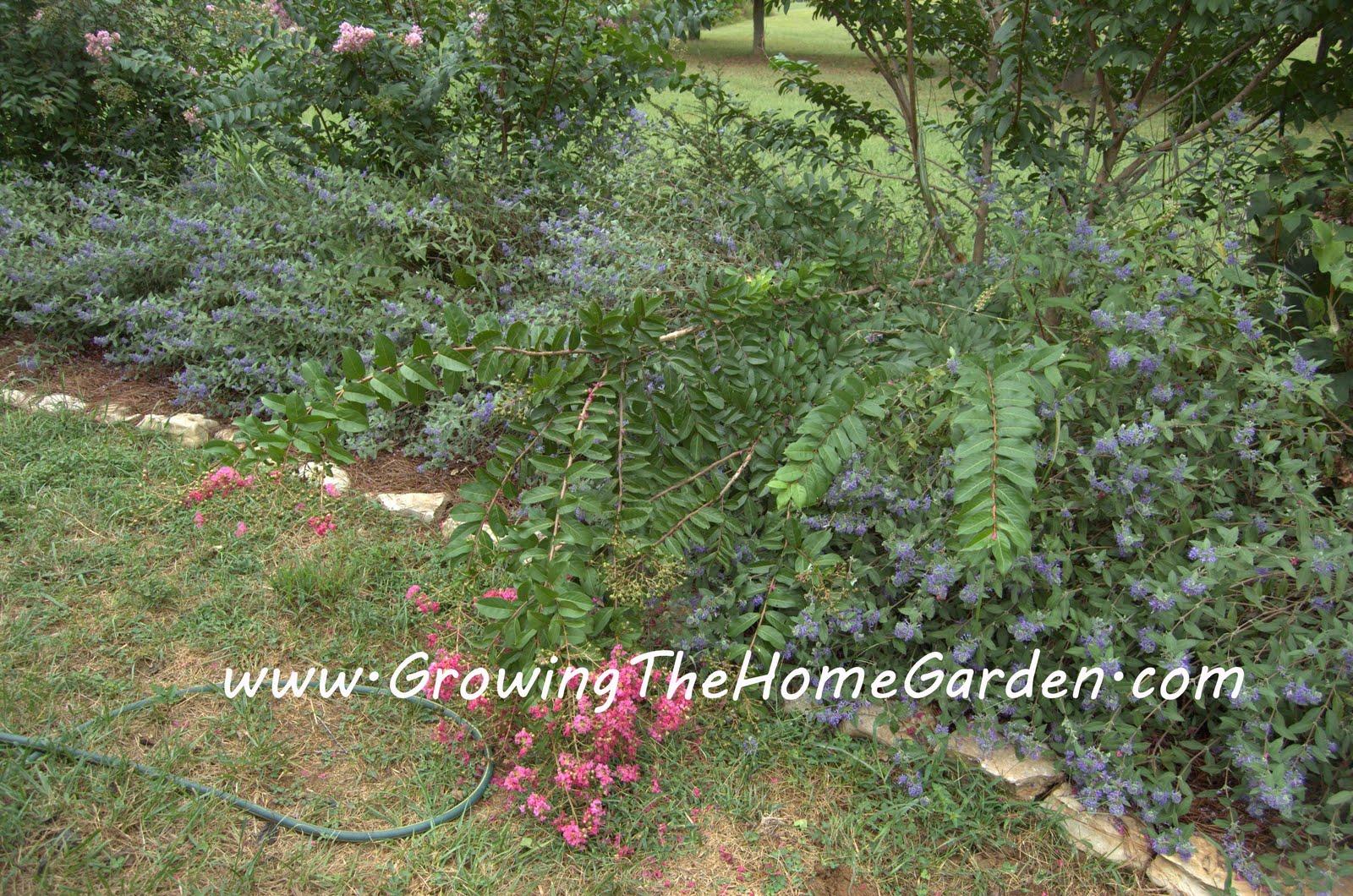 Bad Breaks - Growing The Home Garden