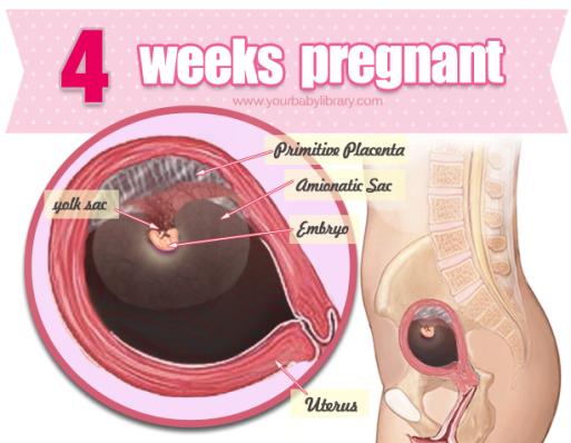 første symptomer på graviditet