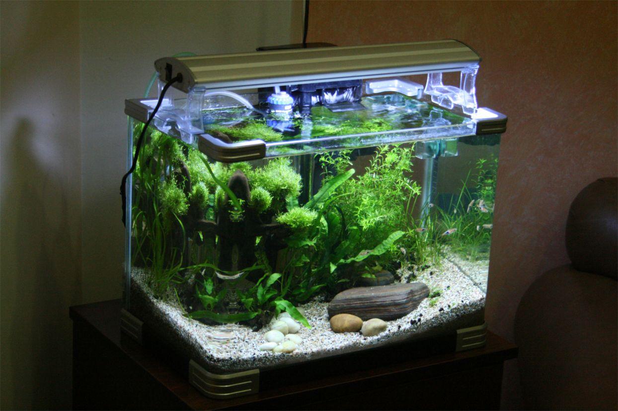s c v  aquascaping ideas  first setup of nano planted