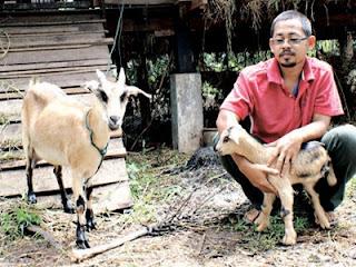Md Faizal melihat anak kambing yang dilahirkan dengan tiga kaki.