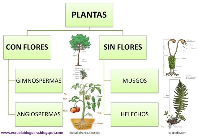 escuela bloguera clasificaci n de las plantas