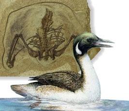 aves prehistoricas Gansus