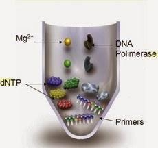 Pré-mix de PCR