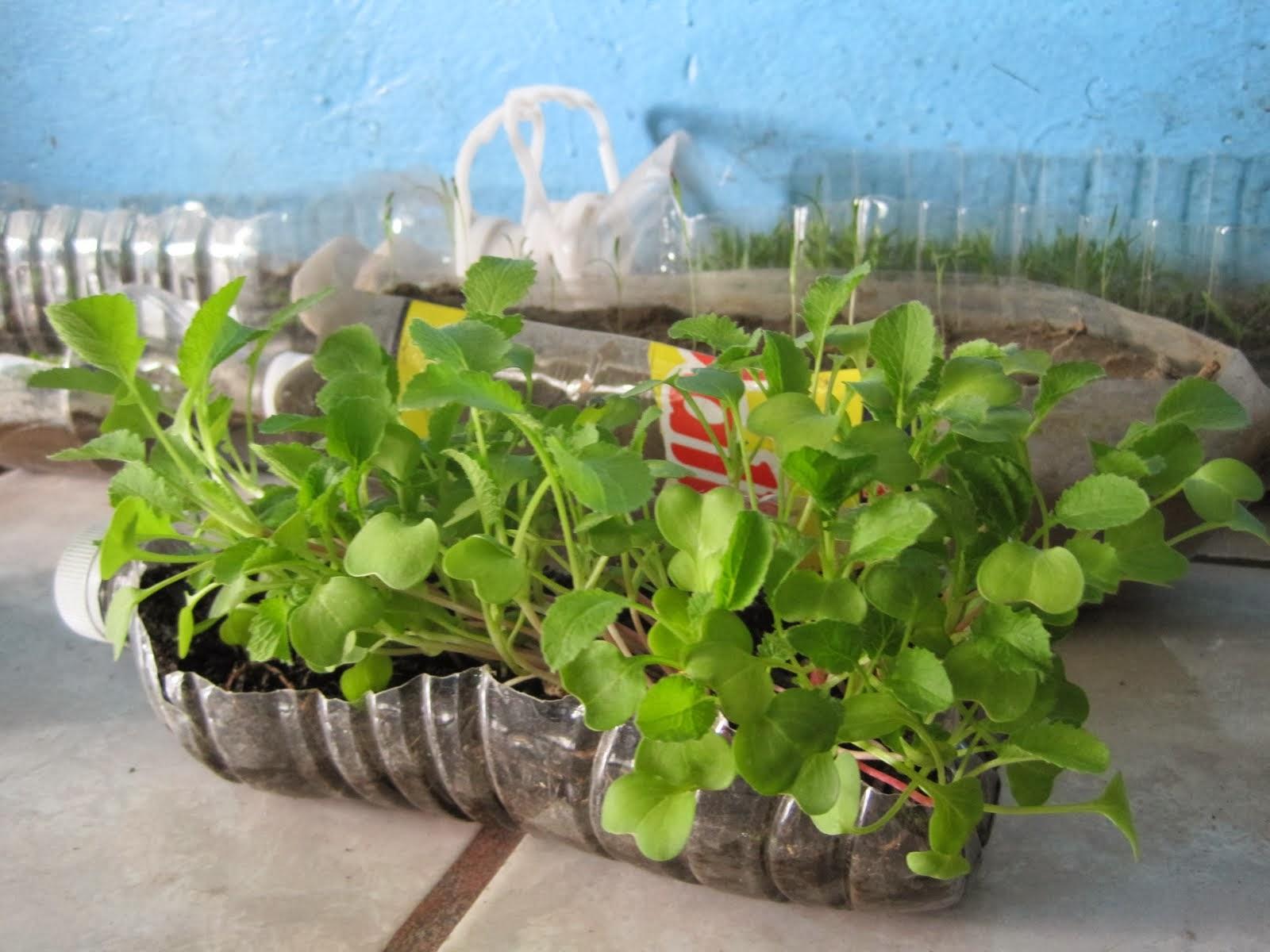 Primaria aprender es f cil reto voluntario conocimiento - Como construir un terrario ...