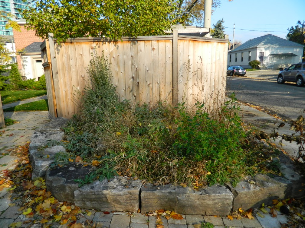Toronto garden cleanup Broadview North before by Paul Jung Gardening Services