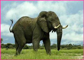 Los 10 animales más fuertes del mundo(Sorprendente)