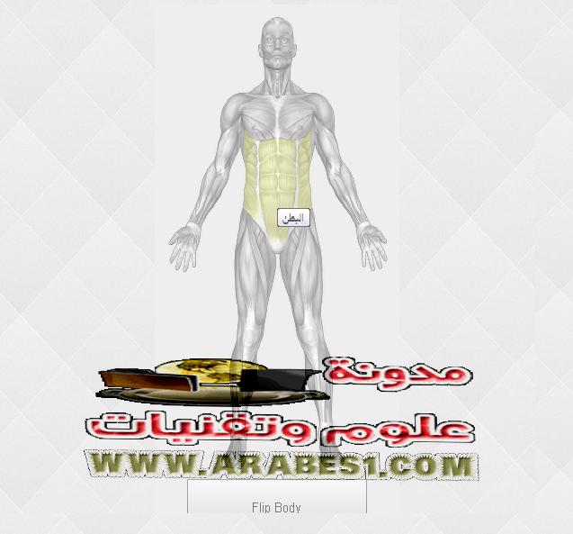 Chest,الصدر ,البطن ,Abdominal ,الفخذ ,Thigh, tendon, Leg muscle ,الاكتاف ,Shoulders, trapèze ,الظهر ,dorso ,الترايسبس ,البايسبس ,biceps, triceps