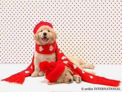 Cute Dogs 13