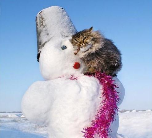 Kaori Likes Things: Caturday: Winter cats edition