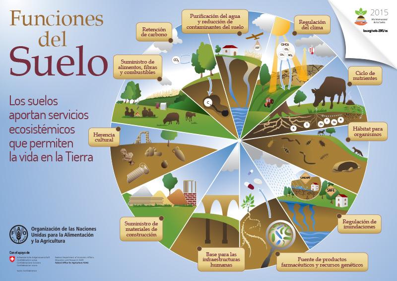Ner san antonio de arriba el suelo tipos de suelo y - Como solar un suelo ...