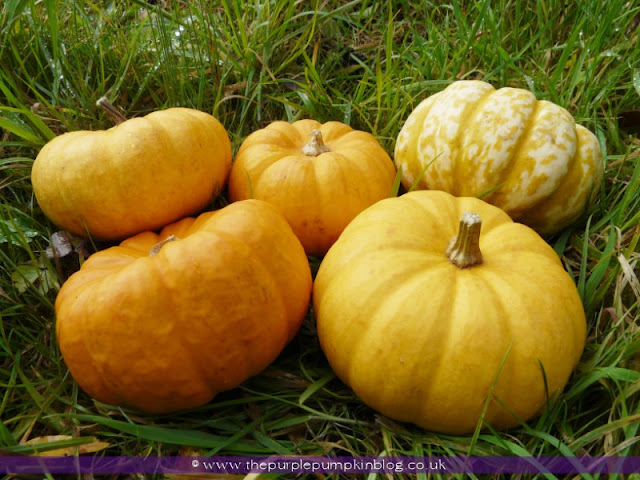 Munchkin Pumpkin Tea-Light Holders | The Purple Pumpkin Blog