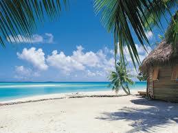 صورة خلفية نخلة على شاطئ رمل في البحر