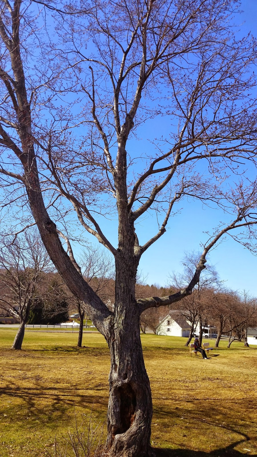 Wordless Wednesday:  A Day At The Park --April 2015  How Did I Get Here? My Amazing Genealogy Journey