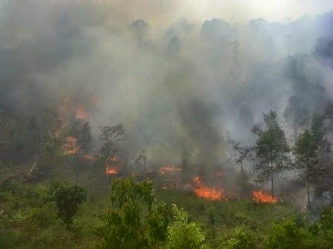 Cagar Alam Bukit Tangkiling Terbakar
