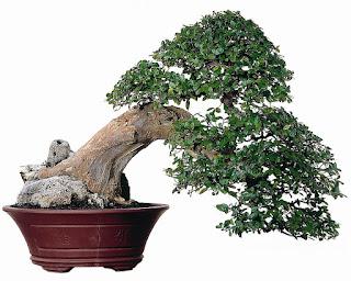 keindahan bonsai