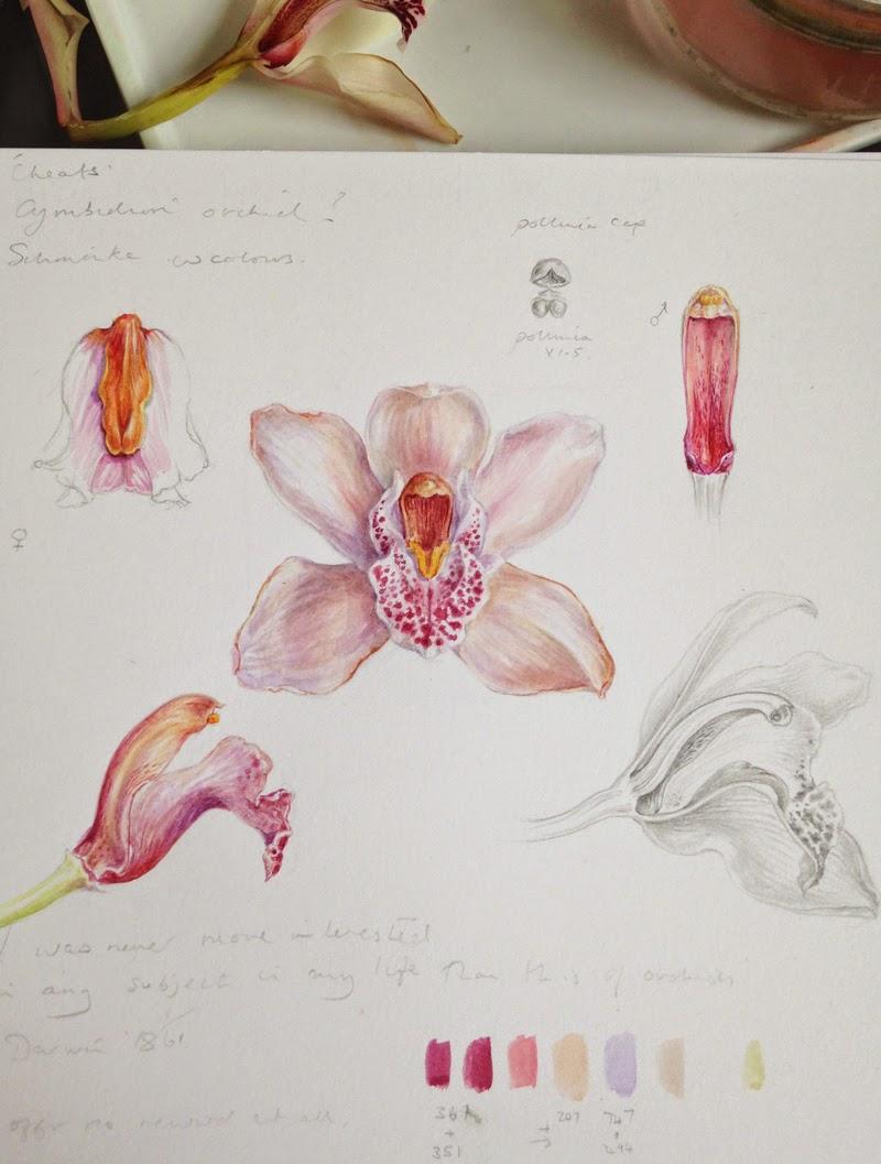 Dianne Sutherland: Day 5, Cymbidium Orchid Flower