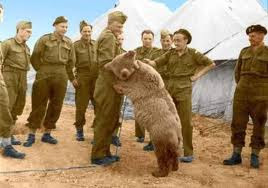 WW2 Private Wojtek the bear plays with Polish soldier
