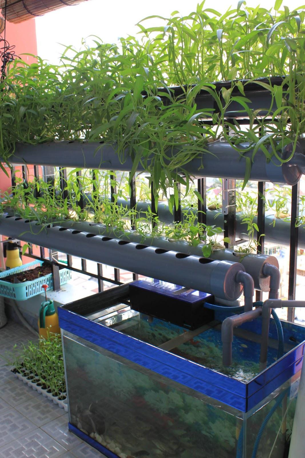 N ng tr i xanh h th ng h p canh ban c ng balcony for Balcony aquaponics