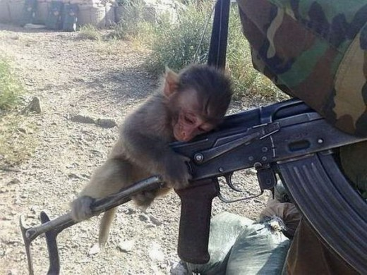 Monkey Machine Gun