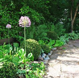 Bild från min trädgård