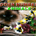 Hidden Numbers - Animals