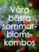 Våra beste blomsterkombos