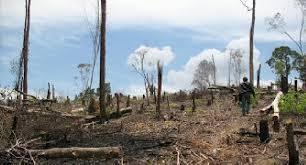 Perambahan Hutan di Bima Masih Marak