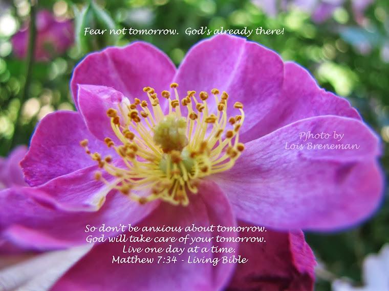 Pink Rose - Matt. 7:34