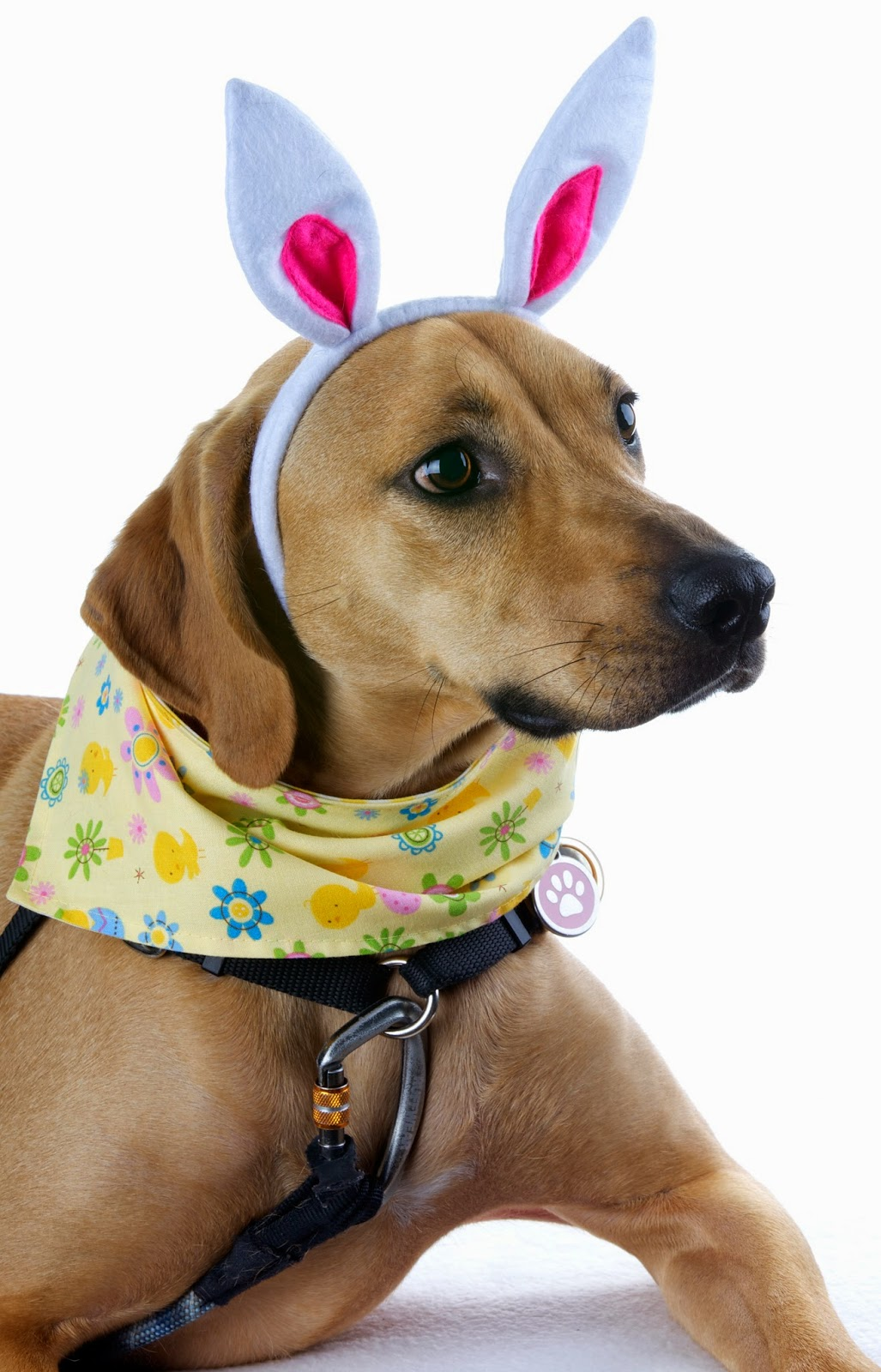 dogs in Easter bunny ears