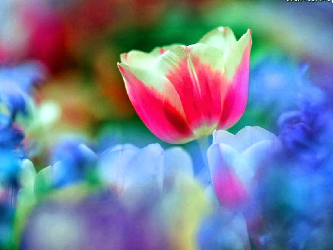 rainbow flower background - photo #4