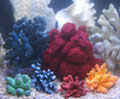 Coral decor for marine, reef, even freshwater aquariums