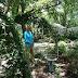 Annie Sloan Chalk Paint™ in the Garden