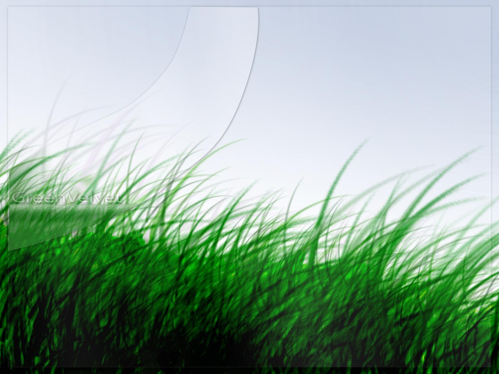 http://1.bp.blogspot.com/-nmUjABhqG2o/Ttxm3yhjJnI/AAAAAAAAAm4/u_XZm72C5MI/s1600/grass-wallpaper-8-703327.jpg