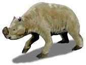 Zygomaturus (marsupial rhino)