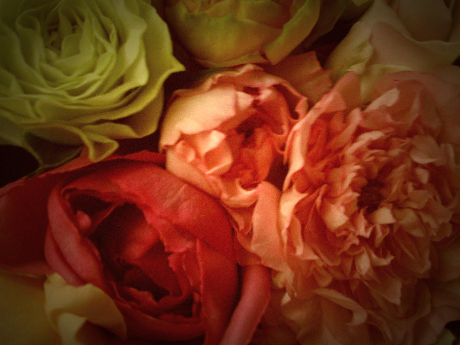 園 天野 バラ