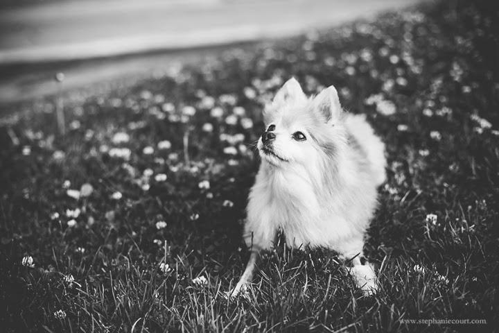 san-francisco-pet-photography