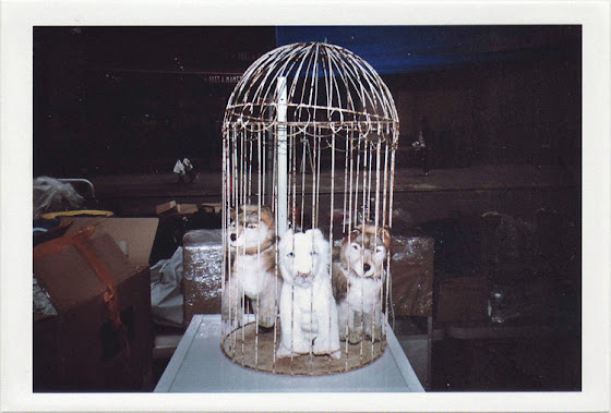 dirty photos - noah's ark fauna photo of caged puppies in new york