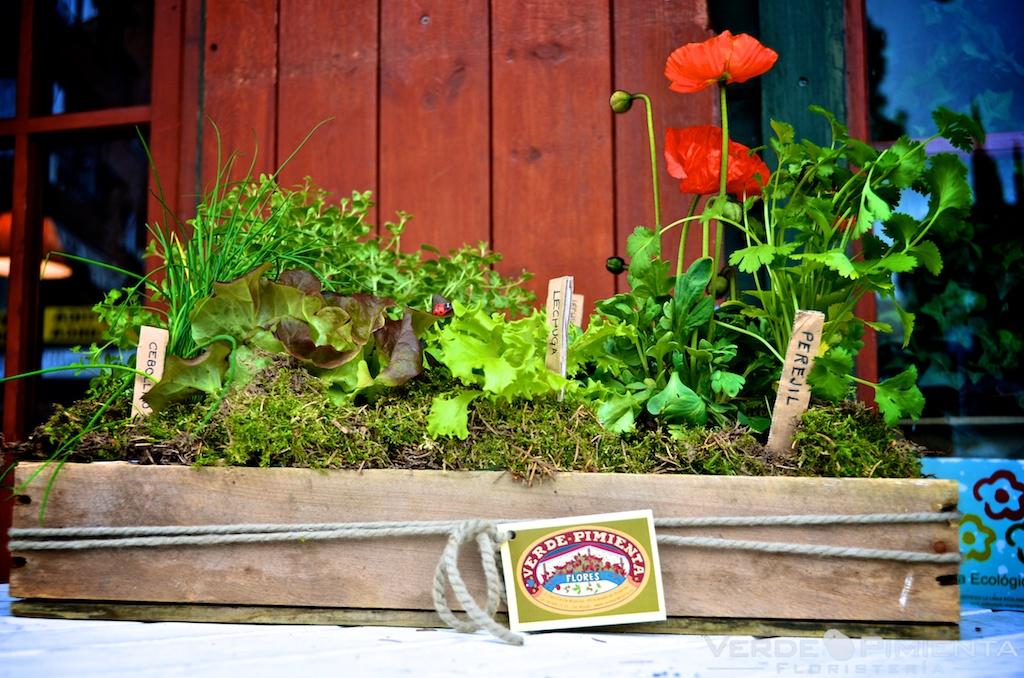 Florister a verdepimienta tu propio huerto urbano for Cultivo pimiento huerto urbano