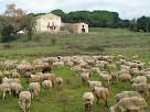 La masia de Can Perereda