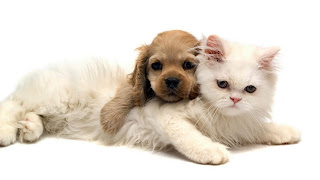 Brown Puppy And White Cat Love HD Wallpaper