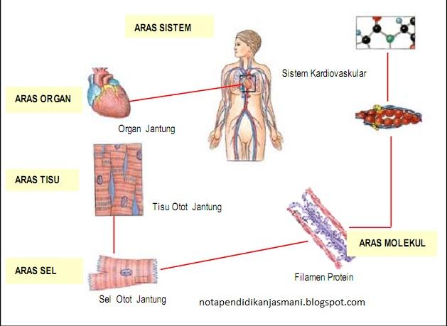 Sistem-sistem tubuh manusia.